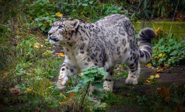 Зоопарк Коркеасаари, Хельсинки