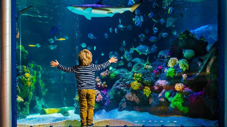 Посетите океанариум <b>SEA LIFE</b> в Хельсинки за 10 евро - VSЁ.FI ...